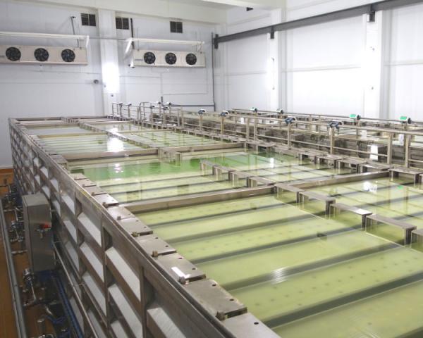 Оборудование, Солильное отделение контейнерного типа Fibosa