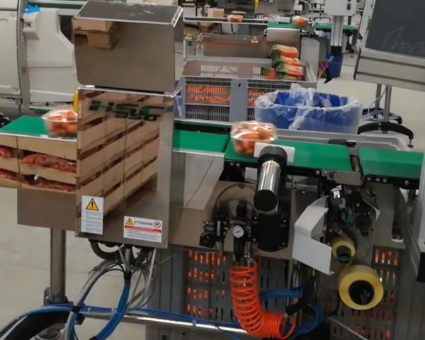 Этикетировщик с печатью на этикетке, контролем веса и отбраковщиком для овощей и фруктов, готовое оборудование Украина