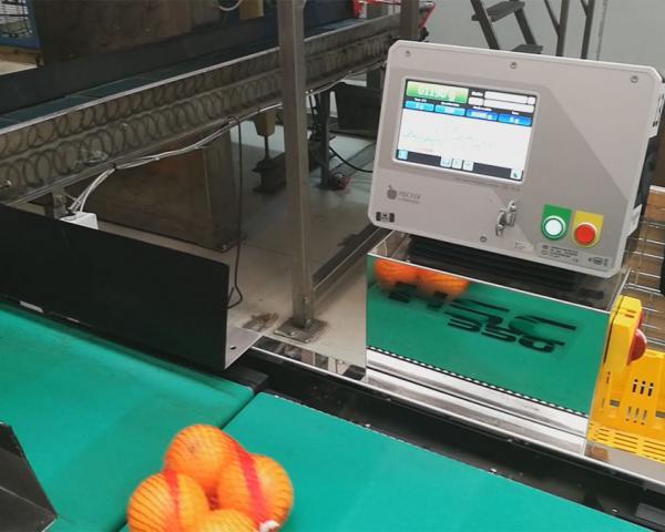 Контроль веса в потоке фасованных апельсинов, готовое оборудование Украина