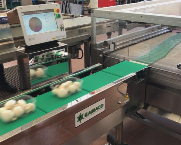Контроль веса в потоке упаковки с грибами шампиньонами, готовое оборудование Украина